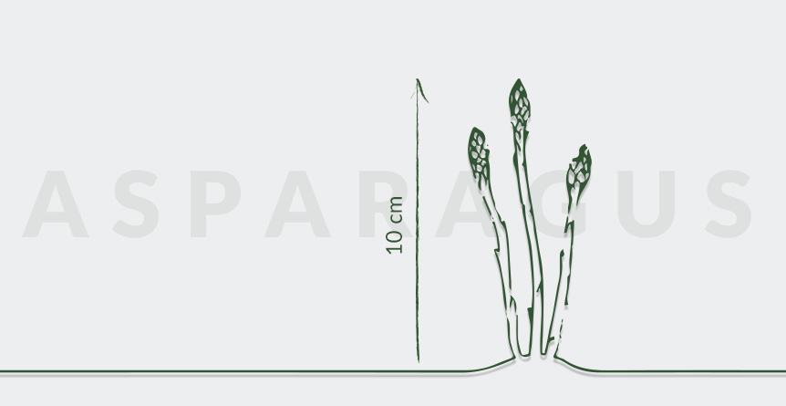 What is so good about asparagus? - Provenance Inns